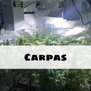 Carpas (indoor)
